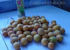 абрикос - сорта