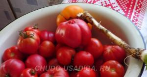 аджика из помидоров с хреном