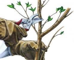 обрезка яблонь осенняя