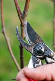 обрезка плодовых деревьев - фото