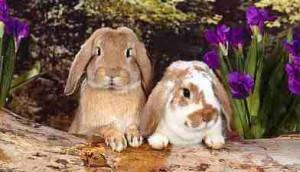 породы кроликов - картинки